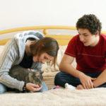 Стерилизация котов и кошек, в каком возрасте она проводится?
