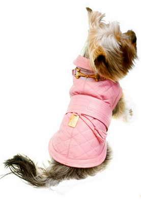 одежда для собак от ведущих дизайнеров