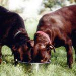 Корма холистик для собак
