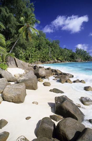 отдых на сейшелах отзывы: кокосом