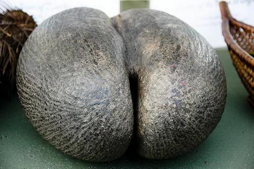 отдых на сейшелах отзывы: маленькая креолка с кокосом